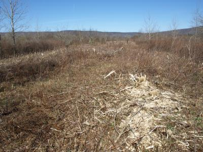 Photo of a strip cut through prime woodcock habitat in West Virginia