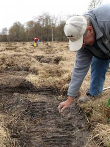 Photo of worker planting seedlings in early stage woodcock habitat