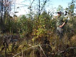 WMI biologist John Lanier inspects regenerating hardwood sprouts on Area C