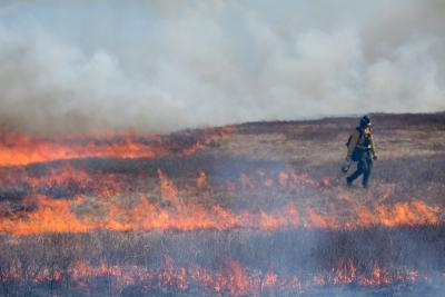 Prescribed burn in grassland