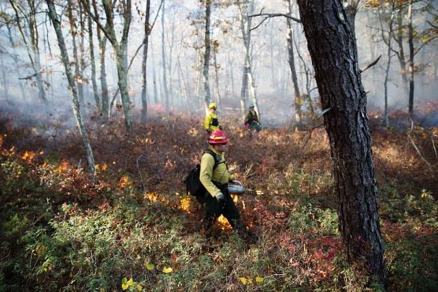 Prescribed burning to help wildlife