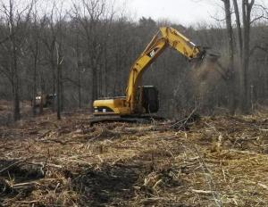 Machine with mulching head mowing down small tree.