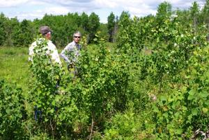 Biologists inspect young forest habitat