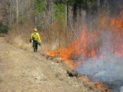 Controlled burn at Mattaponi WMA