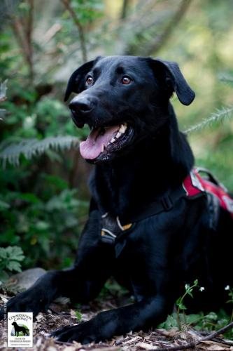 Conservation Canines dog Ranger