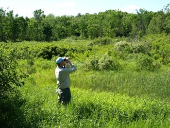 Biologist in golden-winged warbler habitat