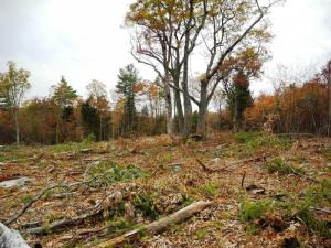 Timber harvest left den trees and snags, plus food- and seed-producing trees, including cherries and oaks./R. Leipold
