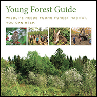 Young forest guid thumbnail image